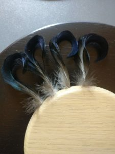Andrikplade til at præsenter andrikkens halefjer
