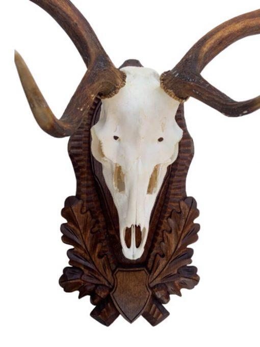 Hjorteplade dåhjort i brun med smukke håndlavede dekorationer monteret med hjort